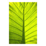 Green veined leaves of tropical foliage in photo print