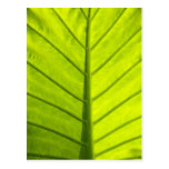 Green veined leaves of tropical foliage in postcard