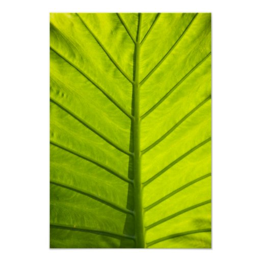 Green veined leaves of tropical foliage in poster