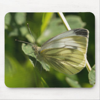 Green-veined White Butterfly Mouse Pad