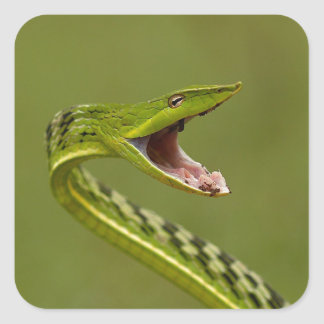 Green Vine Snake Square Stickers
