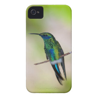 Green Violet-ear Hummingbird Case-Mate iPhone 4 Case
