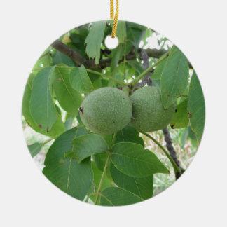 Green walnuts hanging on the tree . Tuscany, Italy Ceramic Ornament