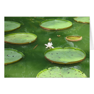 Green water lily greeting cards
