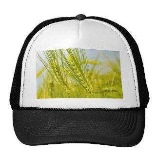 green_wheat_1920_x_1200_widescreen_2-1440x900 gorra
