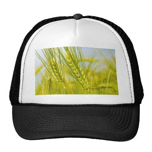 green_wheat_1920_x_1200_widescreen_2-1440x900 gorros