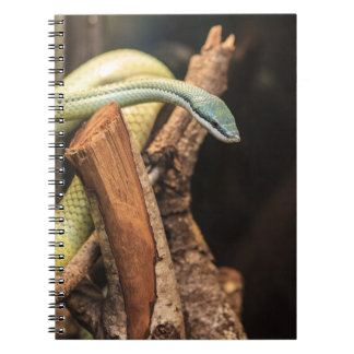 Green White and Yellow Snake Spiral Note Book