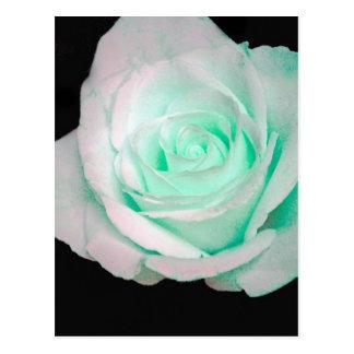 Green & White Rose... Postcard