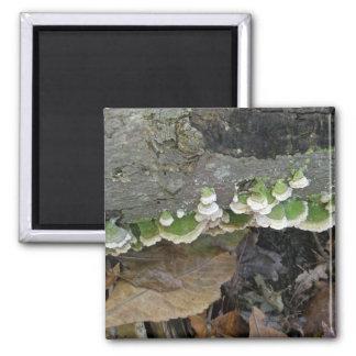 Green & White Striped Shelf Fungi on Log 2 Inch Square Magnet