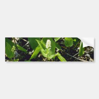 Green Wild Lily-Of-The-Valley (Maianthemum Canaden Bumper Sticker