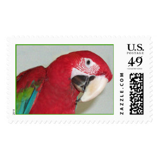 Green Wing Macaw (Large) Postage Stamps