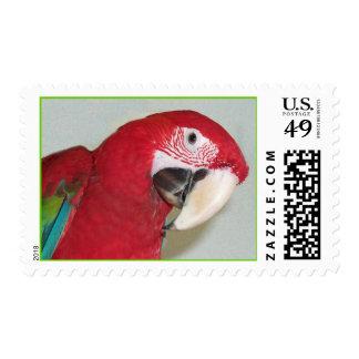Green Wing Macaw (Medium) Postage Stamp