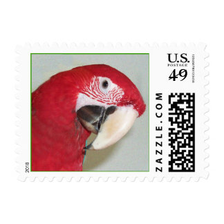 Green Wing Macaw (Small) Postage