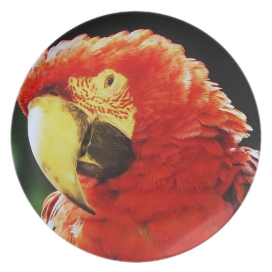Green Winged Macaw Parrot Bird Close-Up Dinner Plate