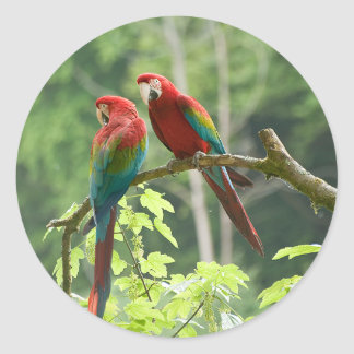 Green-winged Macaws Classic Round Sticker
