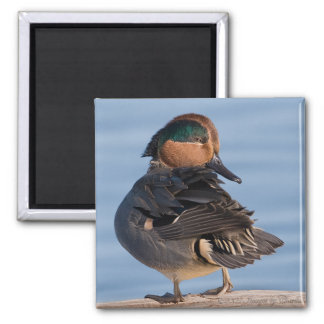 Green-winged Teal Duck Magnet