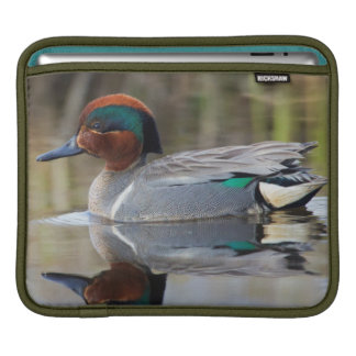 Green-winged Teal Sleeve For iPads