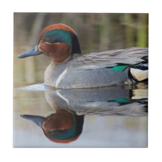 Green-winged Teal Tile