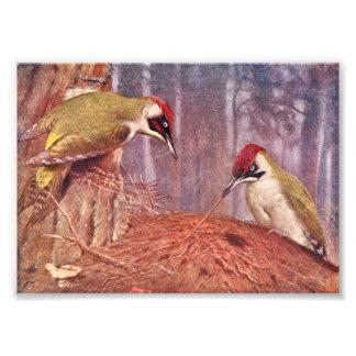 Green Woodpecker Couple Eating Ants Photo Art