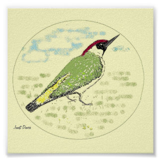 Green Woodpecker Print