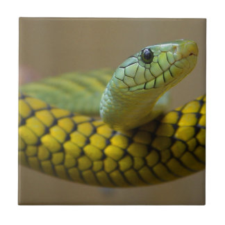 GREEN YELLOW SCALED SNAKE REPTILE PHOTOGRAPHY SMALL SQUARE TILE