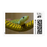 GREEN YELLOW SCALED SNAKE REPTILE PHOTOGRAPHY POSTAGE