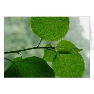 Green Zen Blank Inside Card