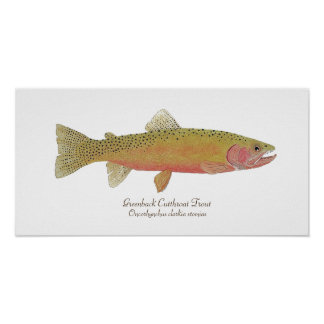 Greenback Cutthroat Trout Poster