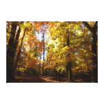Greenbelt Park in Fall II Maryland Nature Scene Canvas Print