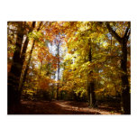 Greenbelt Park in Fall II Maryland Nature Scene Postcard