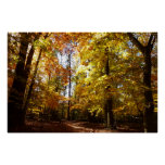 Greenbelt Park in Fall II Maryland Nature Scene Poster