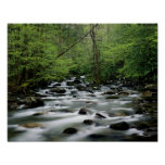 Greenbrier area area, Great Smoky Mountains Posters