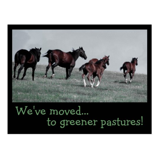 Greener Pastures... Postcard