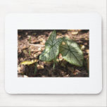 Greenery Mouse Pads