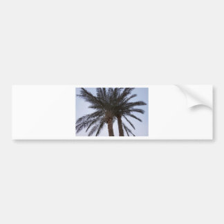 Greenery of palm trees car bumper sticker