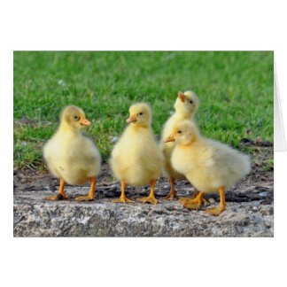 Greenhill Goslings Card