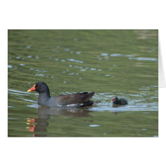 Greenhill Moorhens Card