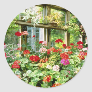 Greenhouse Containing Various Pelargoniums Round Sticker