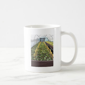 Greenhouse cultivation of Camellia japonica flower Coffee Mug