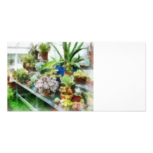Greenhouse With Cactus Picture Card