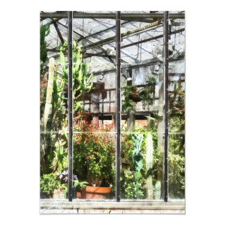 Greenhouse With Large Cactus Card