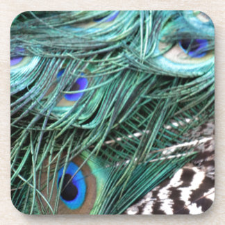greenish Peacock tail Feathers Coasters