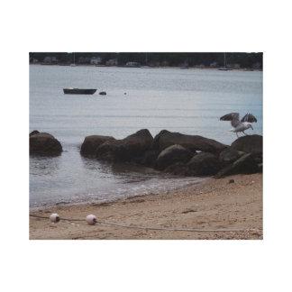 Greenport, Long Island Seagull #1 Gallery Wrap Canvas