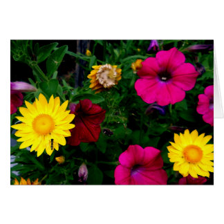 Greeting 123 Cards - Assorted Flowers
