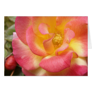 Greeting 123 Cards - Pink and Yellow Flower