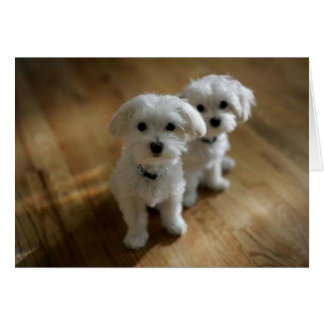 Greeting 123 Cards - Very Cute Puppies