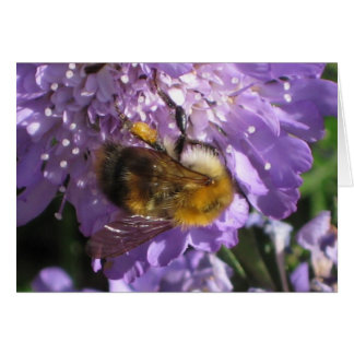 Greeting Card - Bee on Scabious Flower