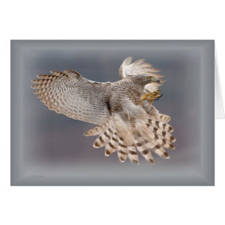 Greeting Card-Bird Series Card