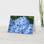 Greeting Card - Blue Hydrangea