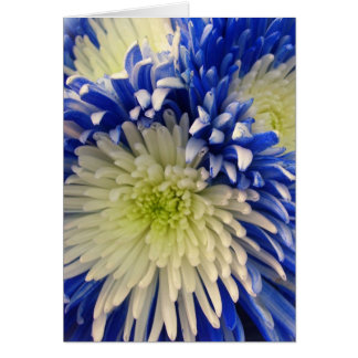 Greeting Card - Blue & White Spider Mums